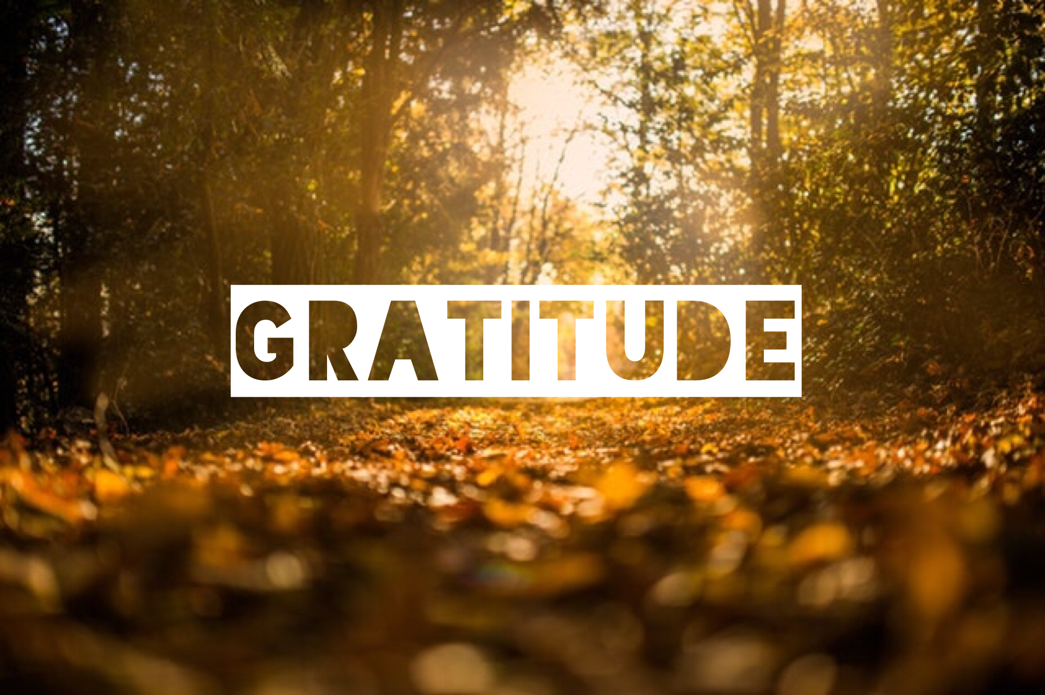 The word gratitude over an image of fall leaves